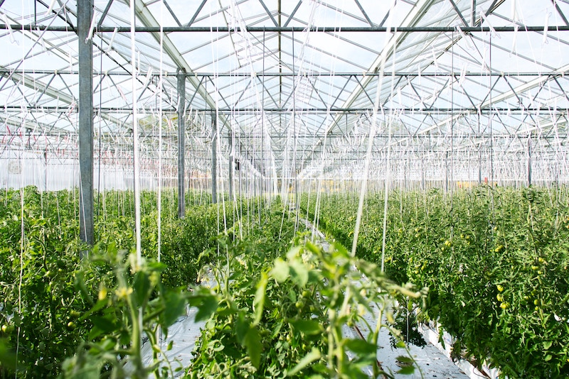 CROP Farm Signs California Processing and Retail Distribution Deals