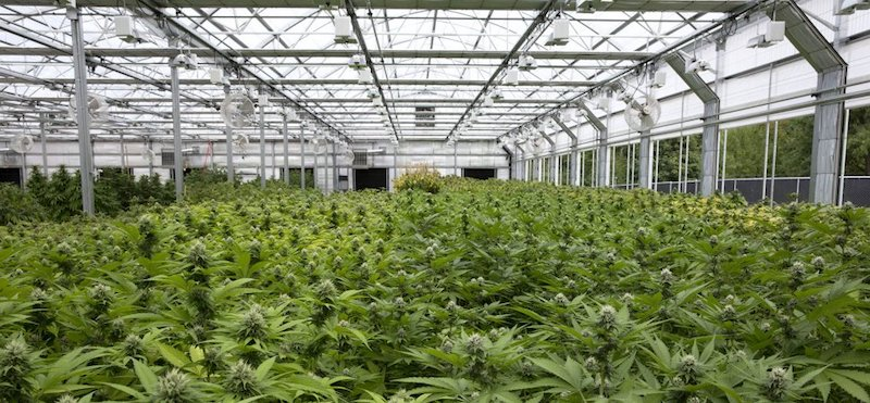 NordikLeaf Announces Agreement to Secure Real Estate for Cannabis Production Facility