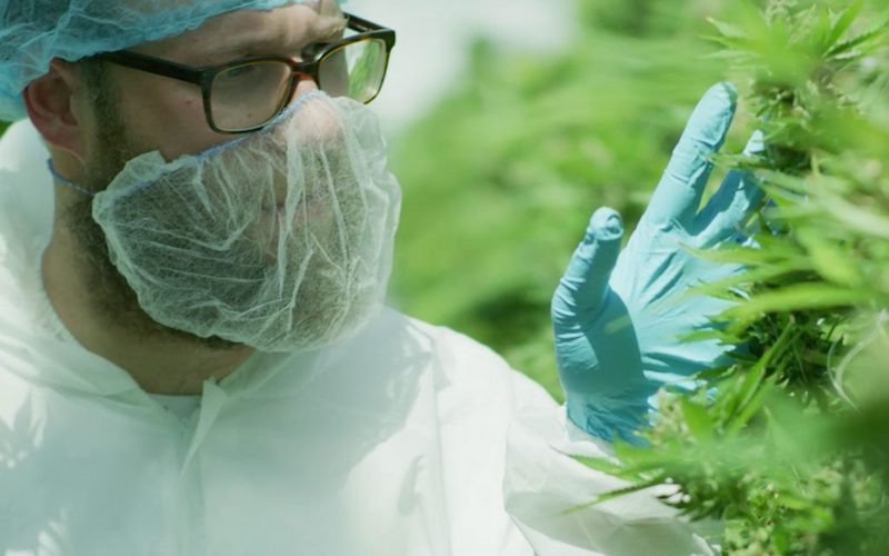 Actor Seth Rogen Enters the Cannabis Market with Recreational Brand, Houseplant