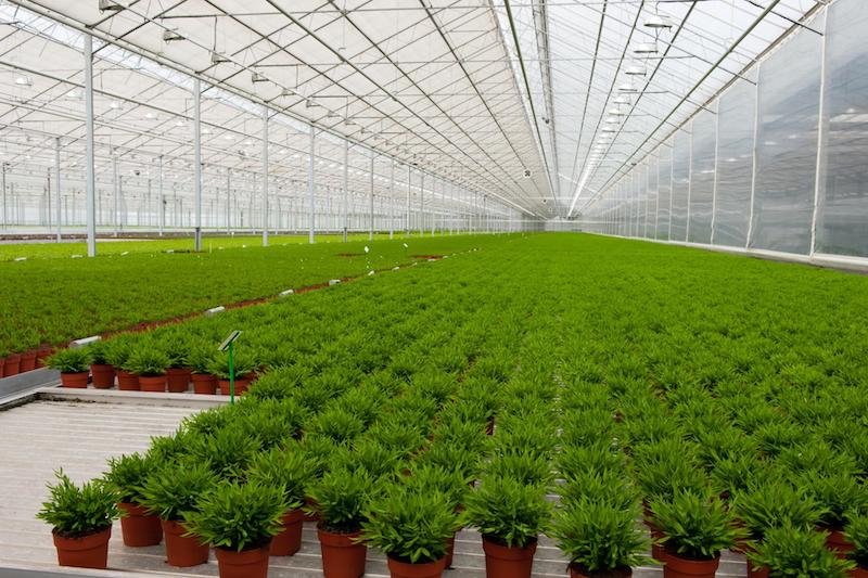 VIVO Cannabis announces Health Canada approval for Hope expansion, doubling production capacity in British Columbia