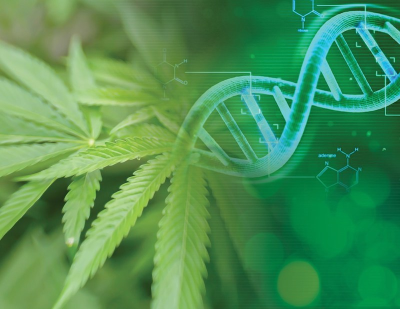 Medicinal Genomics Announces Cannabis Pan-Genome Project