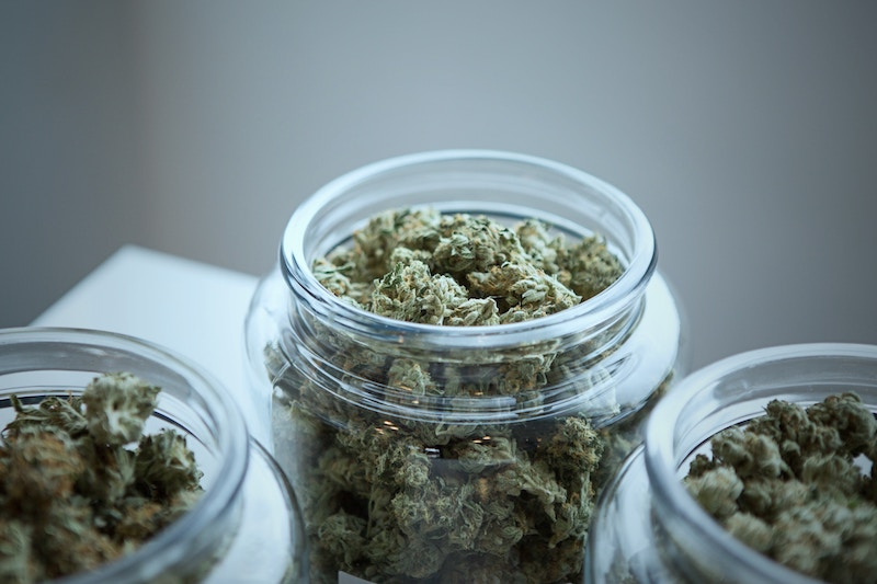 Aurora Cannabis launches search for Canada's Top Budmaster