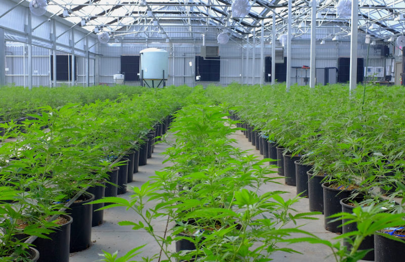 Canary Completes Construction of 44,000 sq. ft. Cannabis Production Facility