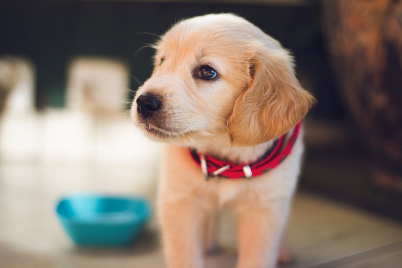 Cannvas Launches Pet-Focused Cannabis Education Platform in the US