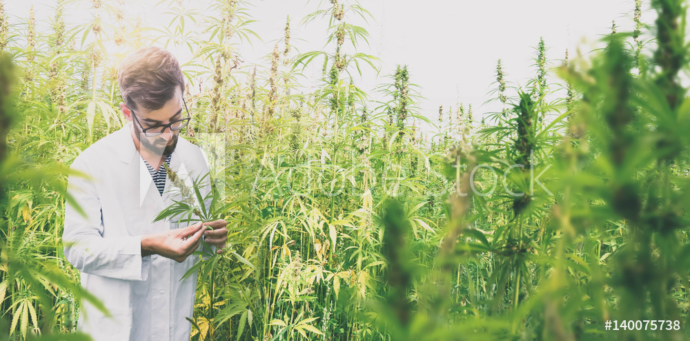 Trait Biosciences Announces First-Ever Successful Stable Transformation of a Hemp Plant