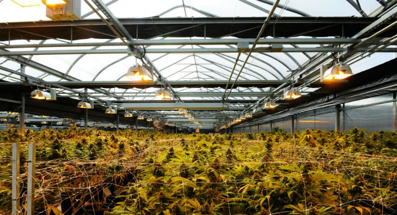 Fohse Secures Cannabis Grow Light Contract with Ontario-Based Curative Cannabis