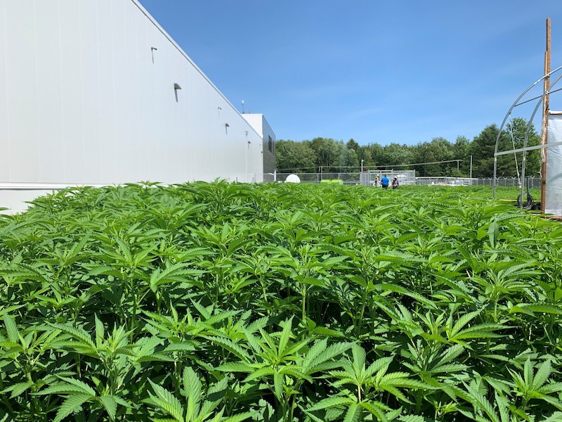 Aurora Cannabis Obtains Two Licences for Outdoor Growing Operations