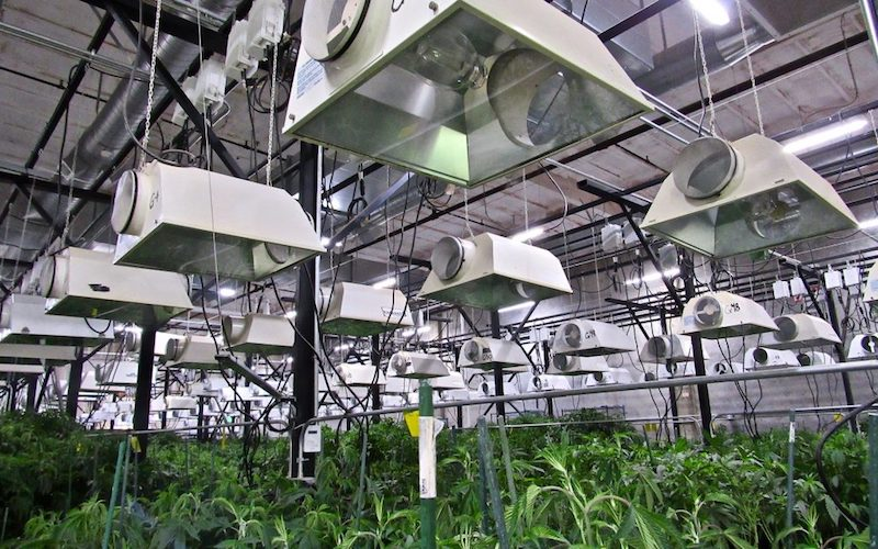 Segra Signs Lease for Second Cannabis Tissue Culture Facility Increasing Estimated Production Capacity to over 30 Million Plants Per Year