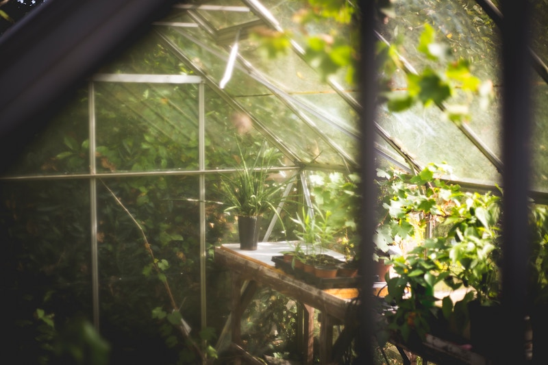 Aphria Inc. Launches Plant Positivity Immersive Winter Garden to Help Combat Winter Blues