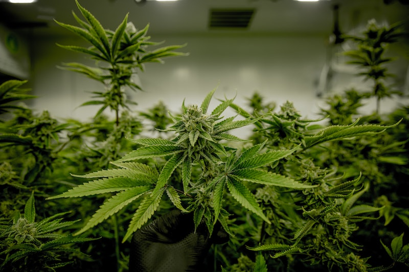 Figr Cannabis Products Available in Saskatchewan