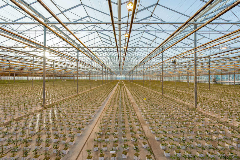 AgraFlora's Delta Greenhouse Receives Agriculture Loan