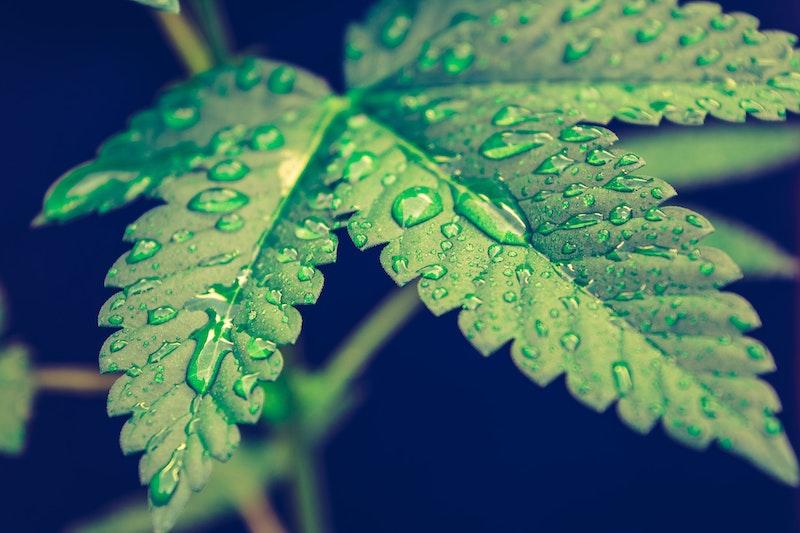 Decibel Cannabis Company Provides Update On Derivative Product Sales and Key Milestones
