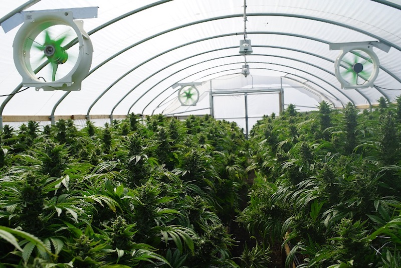 AgraFlora Organics Increases Ownership Position in Propagation Services Canada Inc.