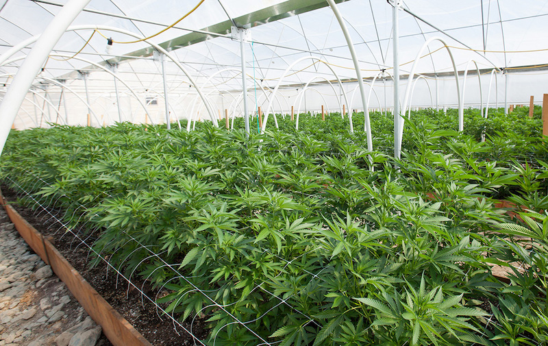 The Green Organic Dutchman Receives Second Organic Certification at Hamilton Facility