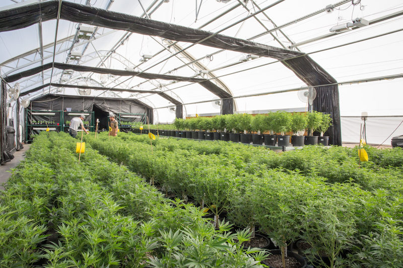 Origin House Completes Acquisition of Cub City, Bolstering Craft Cannabis Production Capabilities