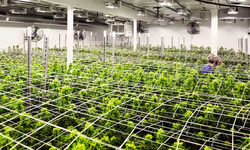 Habitat Receives First Ever Organic Aquaculture Certification for ...