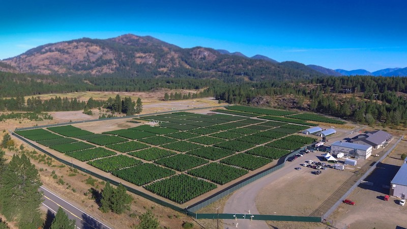 Christina Lake Cannabis Announces Plans to Expand Outdoor Production Using Natural Methods