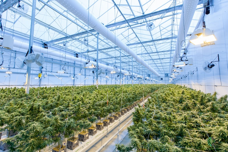 SpeakEasy Opens First of Three 13,300 sq. ft. Licensed Indoor Grow Facilities for Production of Craft-Style Flower