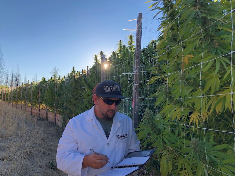 Humboldt Seed Company Partners With Nymera to Offer World's First Feminized, Organic-Certified Cannabis Seeds to Canadian and Global Markets