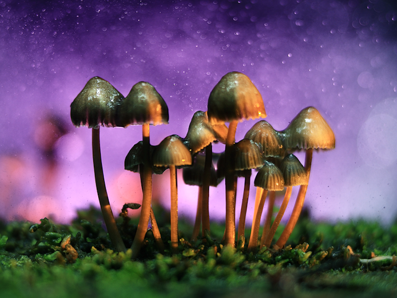 The Good Shroom Co Enters Into Private Labeling Agreement